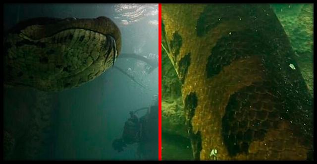 В Бразилии дайверы обнаружили на дне реки 7-метровую древнюю огромную анаконду