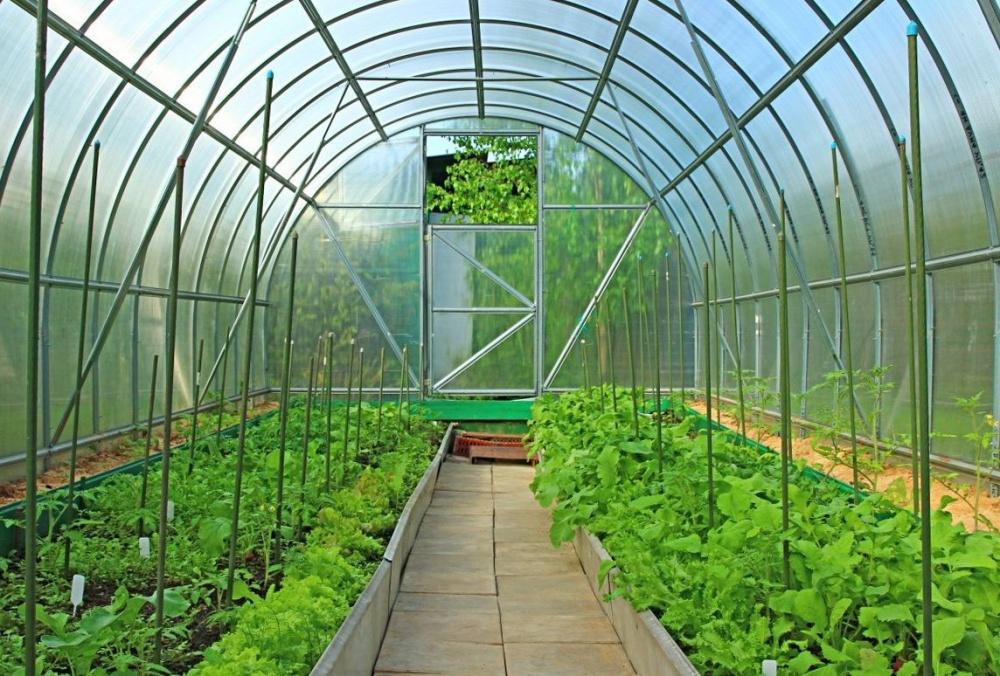 Купить теплицу из поликарбоната и увеличить урожай